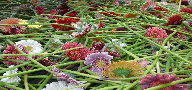 Create your own floral arrangement river 39 s edge for Create your own flower arrangement