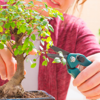 Daily life: Learn the Art of Bonsai