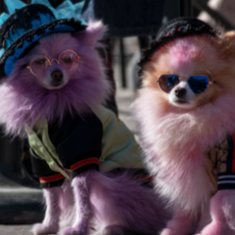 Daily life: Attend a Pet Parade