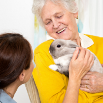 Daily life: Reap the Benefits of Pet Therapy